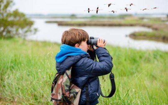 Quelles jumelles pour l'observation des oiseaux ?